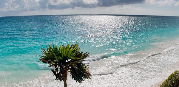 Oasis Palm + Design Suites Miami Beach